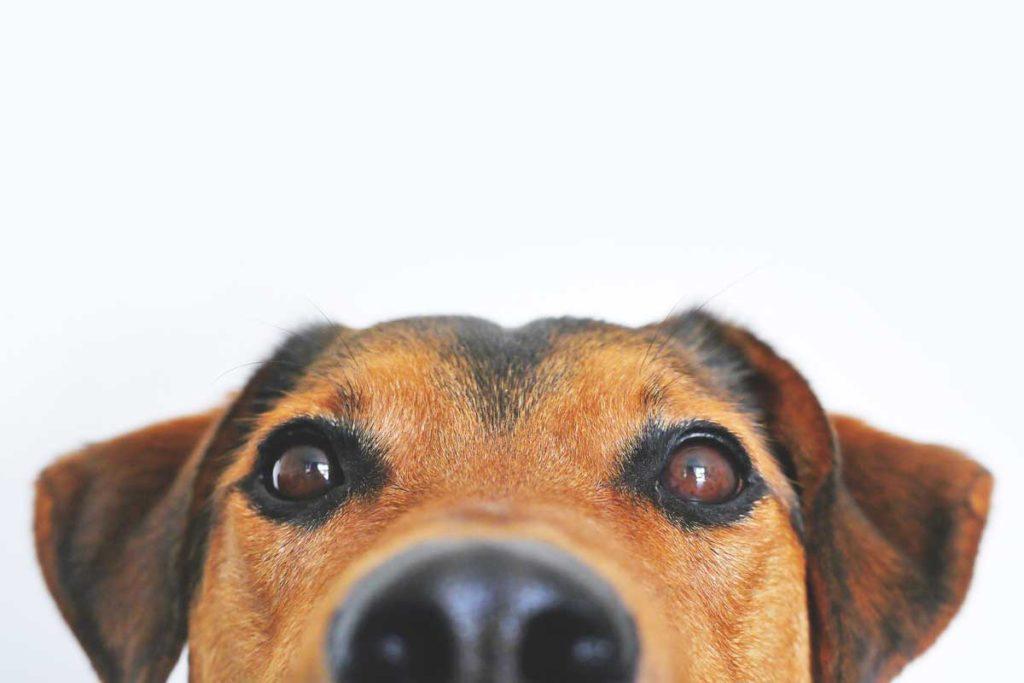 a cute dog peeking over the counter