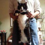 cat stance